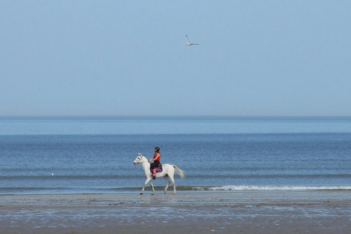 cheval deauville
